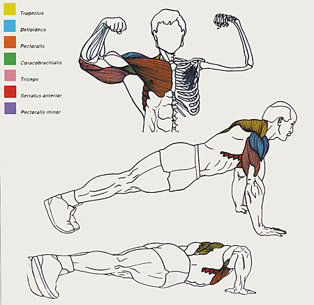Push ups The Perfect Exercise High Octane Lifestyle